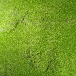Fairy Garden Square - Sponge Grass (25cm x 25cm)